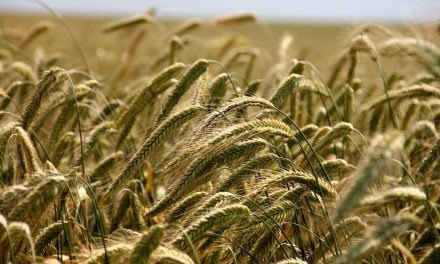Agri Biostimulants 2019