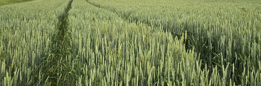Agri Bioestimulantes 2018