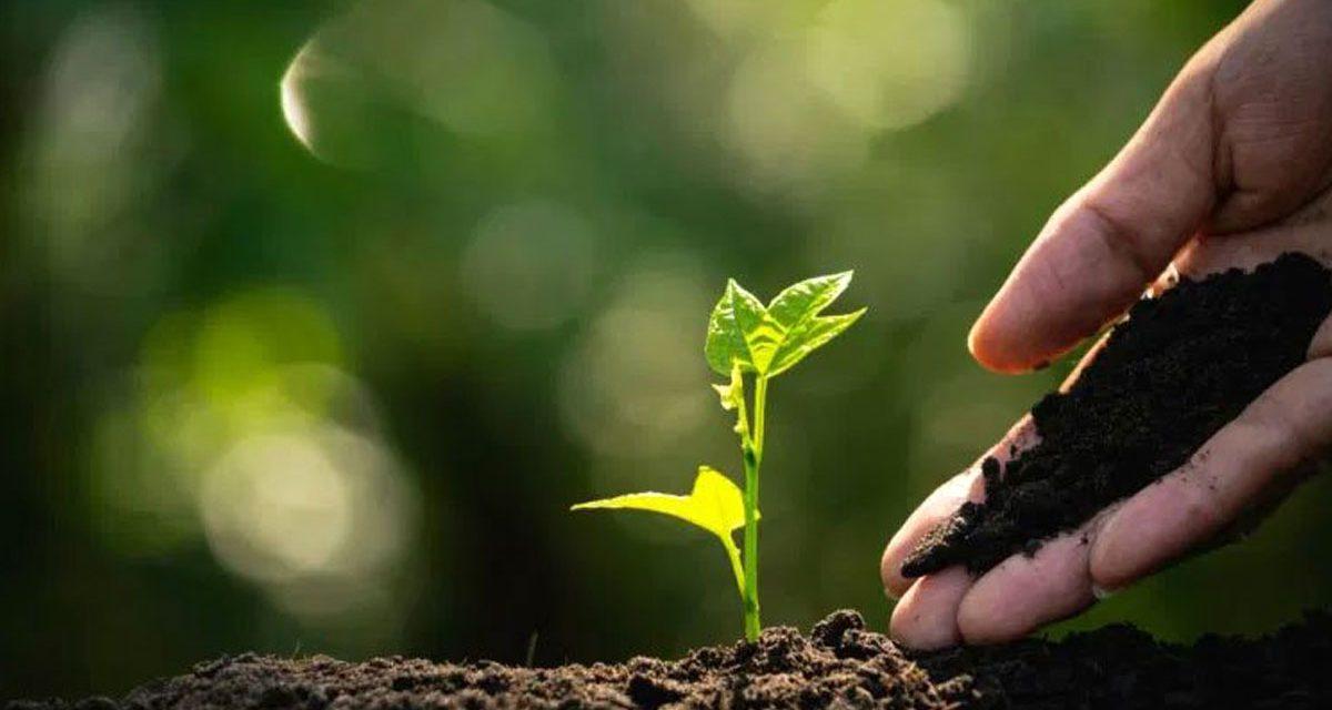 Curso internacional de microorganismos aplicados a la agricultura