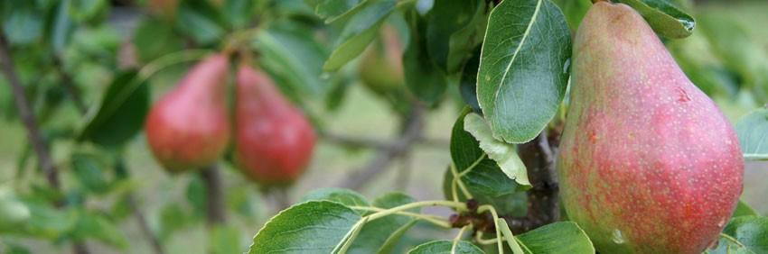 Qué distingue a los bioestimulantes agrícolas de los fertilizantes y los fitosanitarios