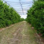 Bioestimulantes, los fertilizantes del futuro