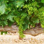 Aplicación de bioestimulantes ante el stress vegetal